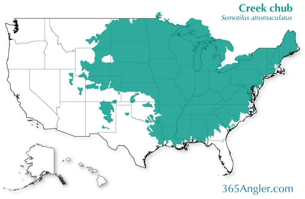 creek chub distribution
