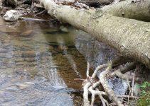 Linn Run trout stream