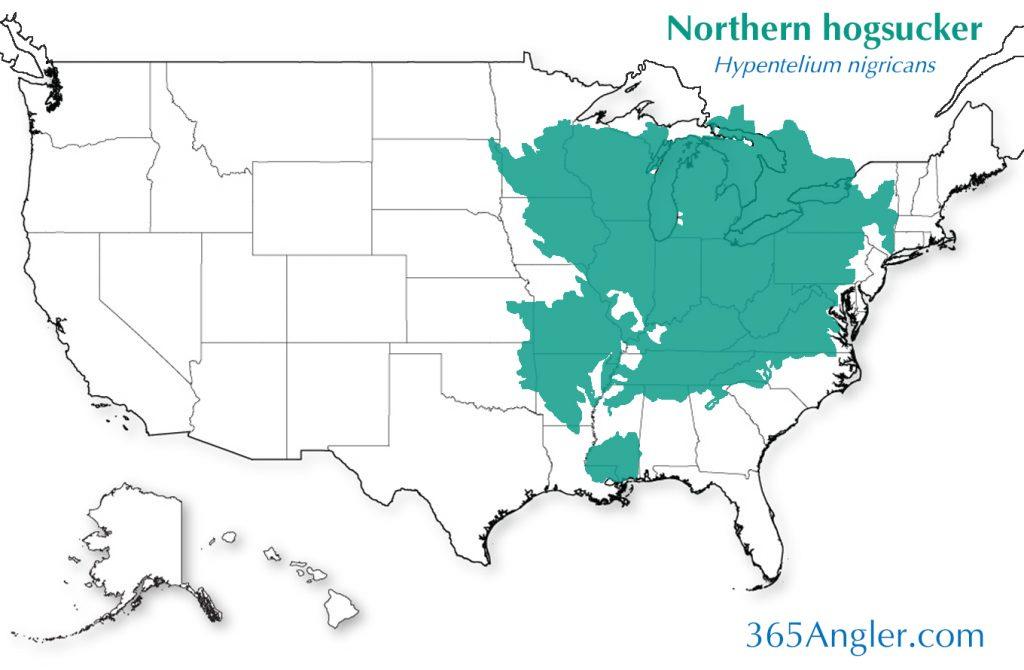 northern hogsucker distribution