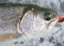 rainbow trout on marmooska jig
