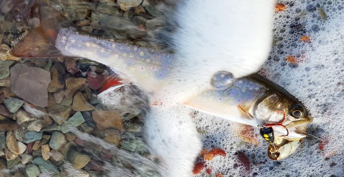 small brook trout caught on panther martin